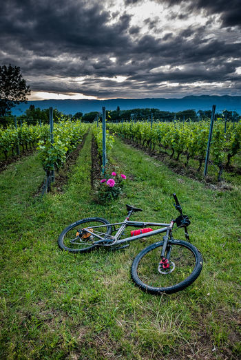 Cloud - Sky Sky Plant Transportation Land Grass Field Nature Landscape Green Color Bicycle No People Environment Beauty In Nature Tranquility Day Scenics - Nature Tranquil Scene Mode Of Transportation Land Vehicle Outdoors Wheel