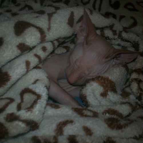 Наш новый член семьи Нора... Our new family member Nora Like4like 💋💞💞❤️💕 Folowforfollow Be Happy Like Donetsk Cat 사랑