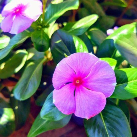 #flower Flower