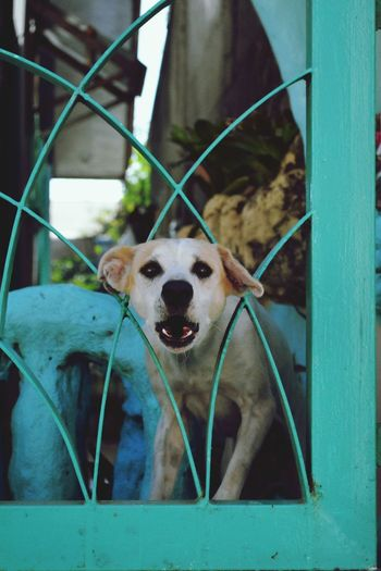Dog Animal Themes Looking At Camera Mammal One Animal Portrait Cage Domestic Animals No People Pets Indoors  Close-up Day Nature