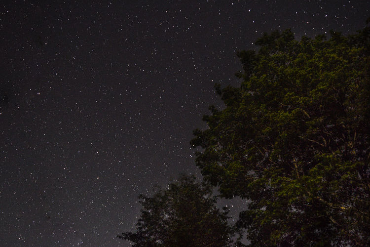 Low angle view of trees against constellation in sky at night