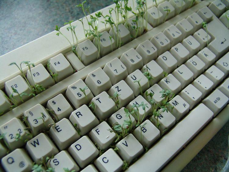 Essen Kräutergarten  Nature Computer Cress Kresse Kräuter Tastatur Tasten