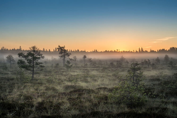 Morning fog and sunrise in Torronsuo National Park, Finland National Park Sunlight Swamp Tree Atmospheric Mood Beauty In Nature Blue Fog Glowing Hazy  Landscape Mire Mist Nature No People Orange Color Outdoors Scenics Sky Sunrise Sunset Tranquil Scene Tranquility Tree Yellow