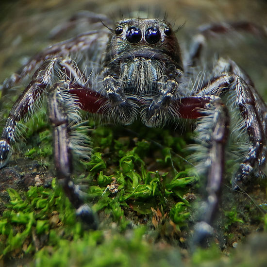 One Animal Spider Animals In The Wild Animal Themes Animal Wildlife Jumping Spider Day No People Close-up Nature Outdoors