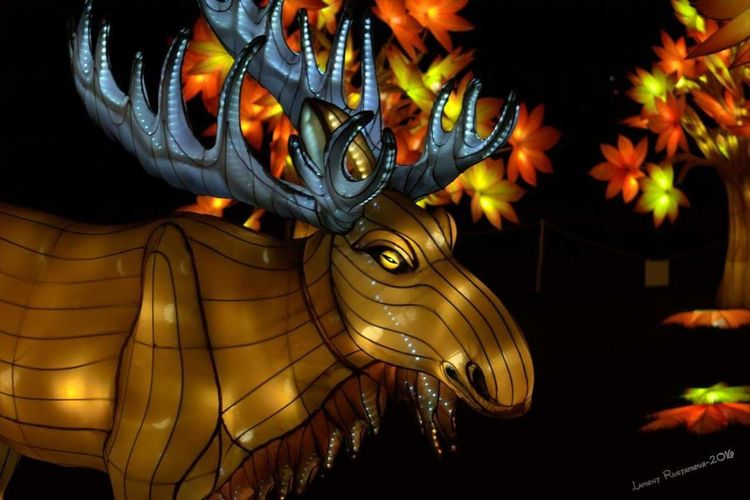 Moose illiminasia 2016 YYC Zoo Paintshop Pro Canada Luminasia 2016 Animal Themes Moose Statue Illuminated Ornate Close-up