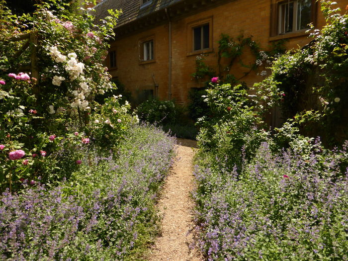 Building Flower Growth Lavender Leading Narrow Pathway Relaxing Moments Roses