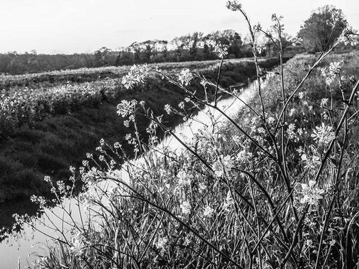 San Rossore 30-03 📷 ✴ Blackandwhite Bnw Bw Biancoenero BuonaNotte Goodnight Pisa Italia Toscana Roma Milano Livorno Ig_italia Ig_pisa Igerspisa Vivopisa Volgopisa Igersitalia Igerstoscana Ig_italy Ig_europe Ig_roma Genova Igersgermany Igersmilano nature natureza sunset tramonto