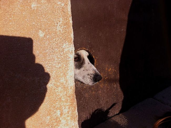 Domestic Animals Animal Themes Mammal Animal Head  One Animal Day Dog Door Rural Scene Pet Portraits