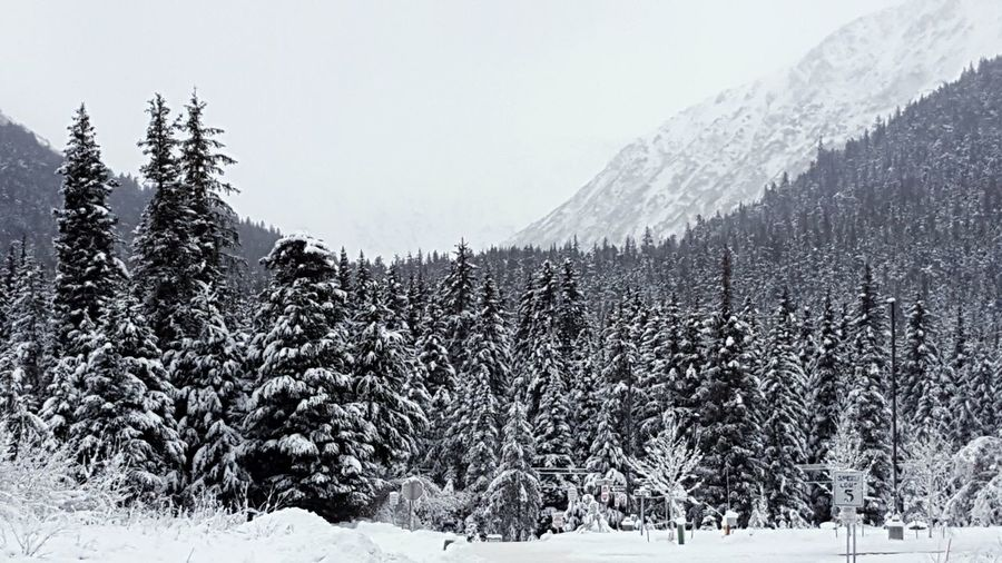 Winter Snowy Mountains Snow Monochrome White Trees Wilderness Rural Cold Peaceful Outdoors Nature Winter Scene Alaska Quiet Nature_collection Outdoor Photography Gray Christmas Black And White Photography Scenic Forest