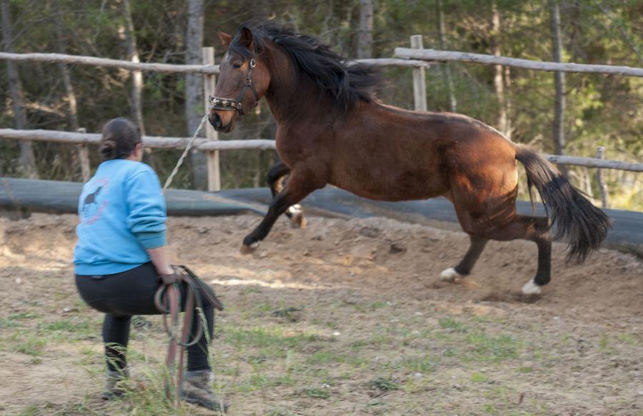 Colt Doma EyeEm Best Shots Fight Girl Horse Horsepower Potro Strong Taming Showcase: January WomeninBusiness