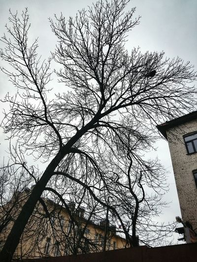 Grey winter sky Low Angle View Tree Day No People Outdoors Built Structure Architecture Sky Building Exterior Nature Branch Saint Petersburg St Petersburg Tranquil Scene Winter Scenics December2017 Architecture City Beauty In Nature Cloud - Sky