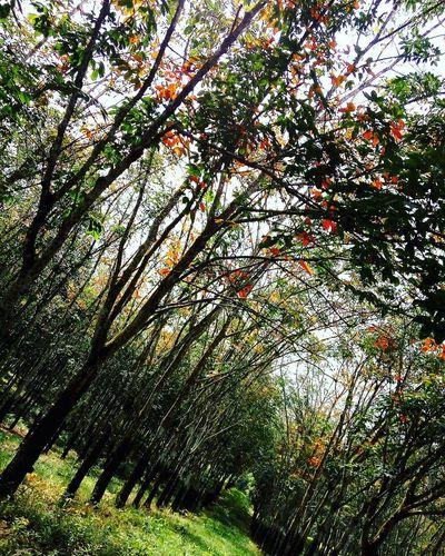 Nature Kebunkaret Beauty In Nature Eyemmarket Maximum Closeness