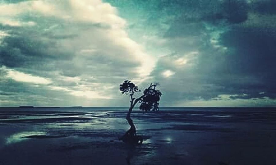 🌲📷 Two Is Better Than One Sea Water Beach Tranquil Scene Tree Horizon Over Water Tranquility Silhouette Scenics Sky Beauty In Nature Dusk Shore Nature Sand Cloud - Sky Wave Cloud Calm Majestic Shekelsphotography Fresh On Eyeem