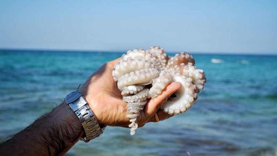 A fresh octopus
