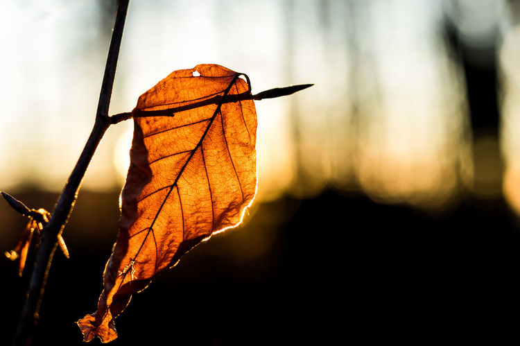 Lonely Leaf Lonely Autumn Beauty In Nature Change Close-up Cold Colorful Day Detail Dry Focus On Foreground Fragility Leaf Maple Maple Leaf Nature No People One Animal Orange Color Outdoors Sad & Lonely Sky Sunlight Warm Water