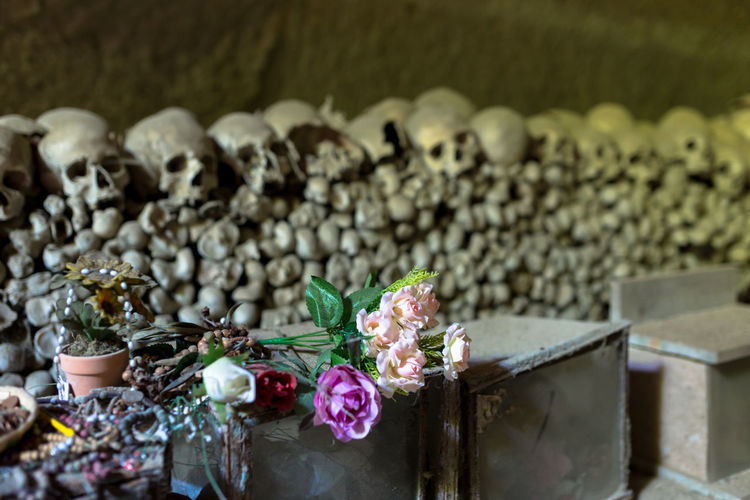 Close-up of flowers on container against human skulls