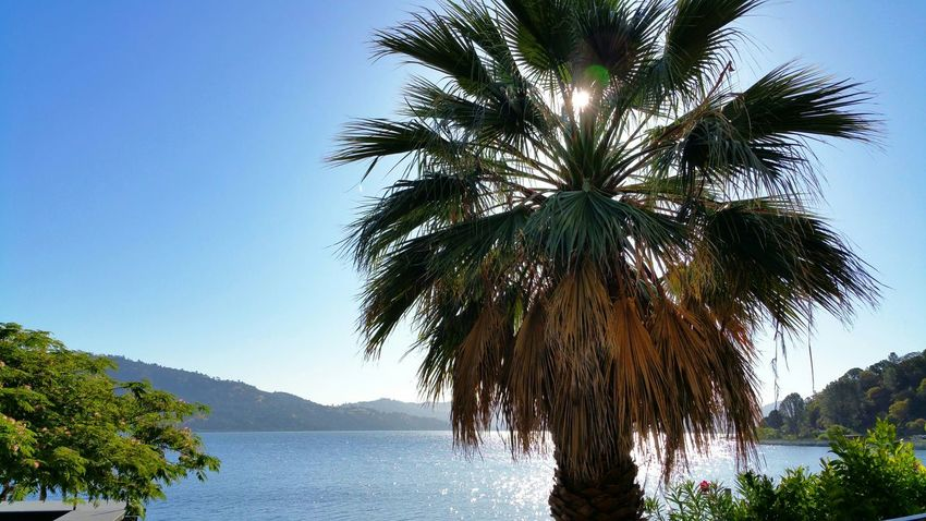 Good morning Clear lake. Lake View Nature Nature_collection Beautiful Day Landscape Peace And Quiet Enjoying The Sun