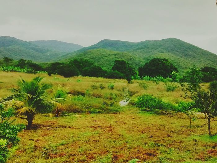 This is my world Nature