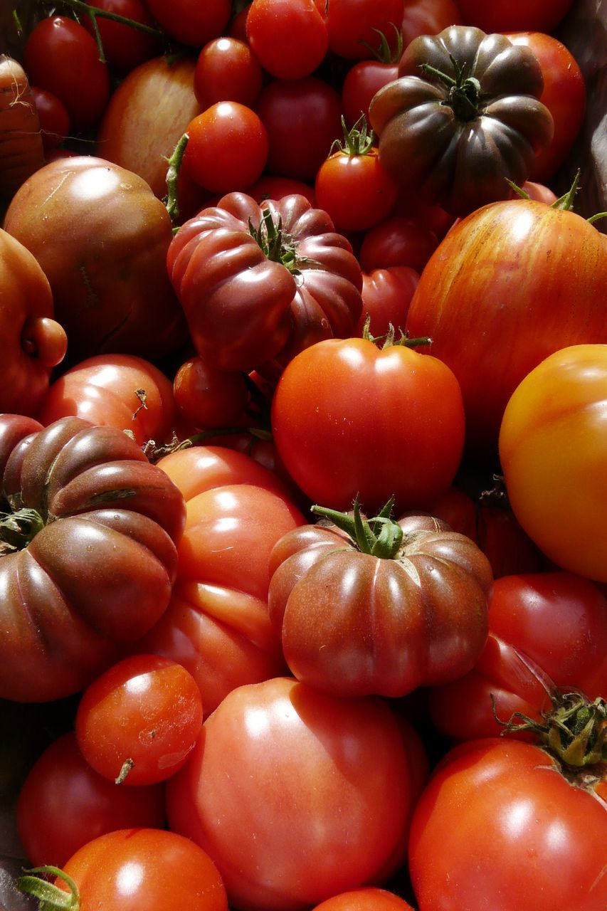 vegetable, food, food and drink, healthy eating, still life, retail, for sale, tomato, abundance, no people, backgrounds, full frame, variation, red, freshness, raw food, large group of objects, market, pumpkin, stack, farmer market, close-up, day, indoors, squash - vegetable