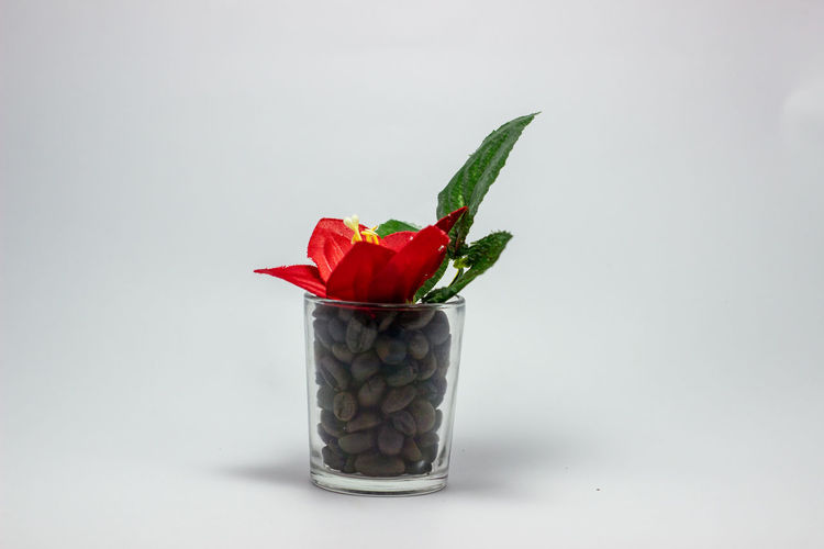 Close-up of red rose in glass against white background