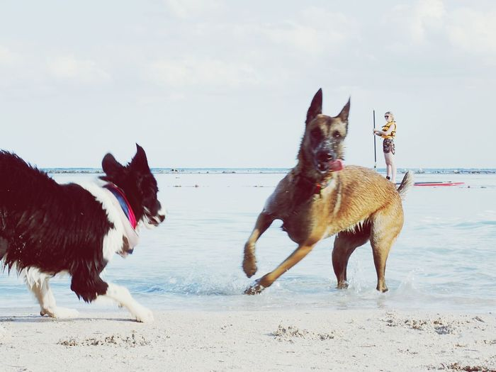 View of dogs on beach