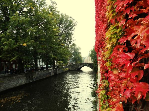Tree Architecture Bridge - Man Made Structure Built Structure Day Outdoors No People Nature Water Growth Beauty In Nature Sky Clear Sky Travel Destinations Vacations Flamand Architecture Beauty In Nature Brugge, Belgium Autumn Colors Autumn In Brugge Belgium Cityscape Brugge City Red