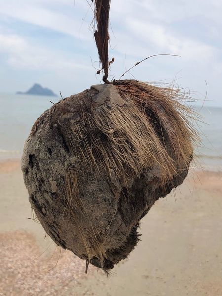 A washed up coconut at the seaside Dangling Hanging Food And Drink Waist Seaside Beach Washed Up Drink Food Ashore Dry Day Outdoors Nature Sky No People Sand Close-up
