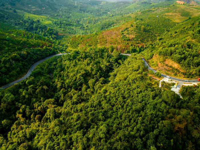DJI X Eyeem Drone  Above Aerial View Beauty In Nature Curve Day Dronephotography Forest Green Color High Angle View Landscape Lush Foliage Mountain Mountain Range Mountain Road Nature No People Outdoors Pine Tree Road Rural Scene Scenics Skypixel Tea Crop Tree Winding Road WoodLand