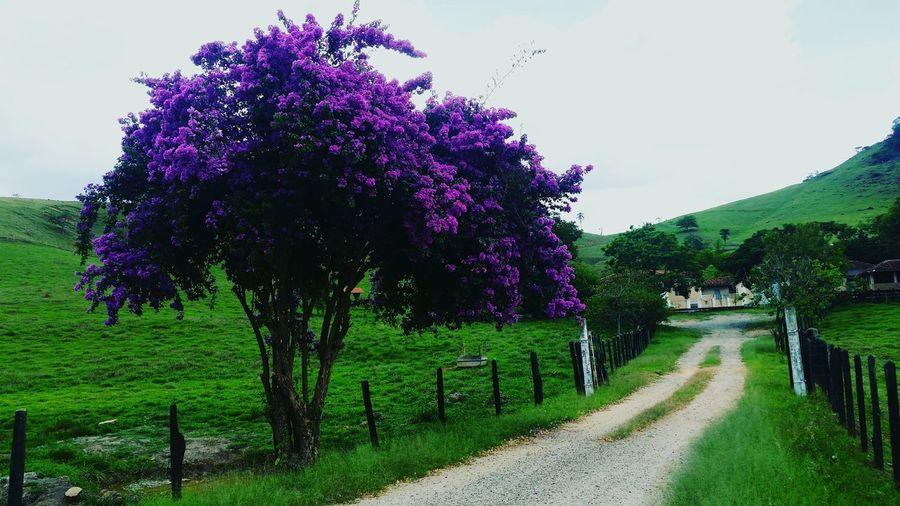 Pedralva - MG