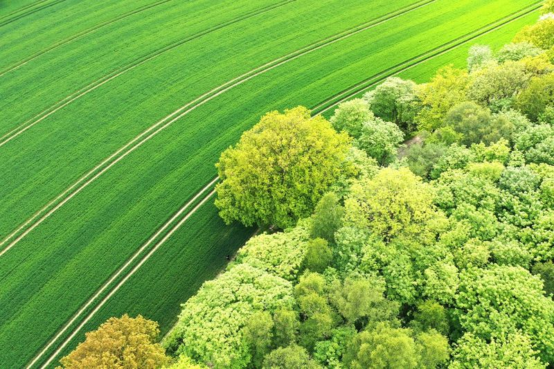 Fields Green Color Plant Growth Beauty In Nature Field Land Tranquility Tree Tranquil Scene Environment Rural Scene Agriculture Landscape High Angle View No People Outdoors Nature Crop  Freshness Day