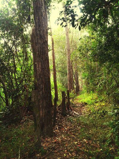 IPSGreen Beautiful morning walks 💚😊 Taking Photos