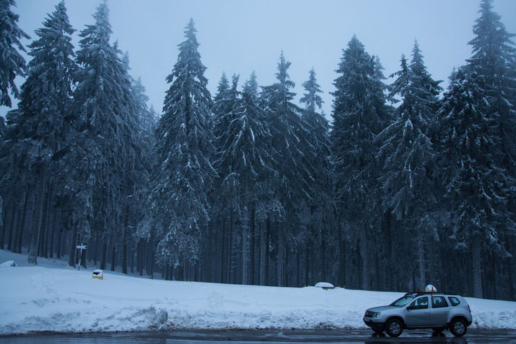 Snow Cold Temperature Car Transylvania Traveling Travel Photography Roads Around The World Mountain Range Mountain Road Mountain Pass Pasul Bratocea Ciucas Mountains Pinetrees Frozen Trees Forest Wintertime Winter Trees Frozen It's About The Journey
