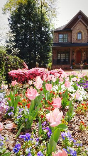 UrbanSpringFever Tulips🌷 PrettyInPink Beautifulbed Spring Flowers Findingthebeauty Beautifulhome Landscaping Atlanta Urban Spring Fever Millennial Pink