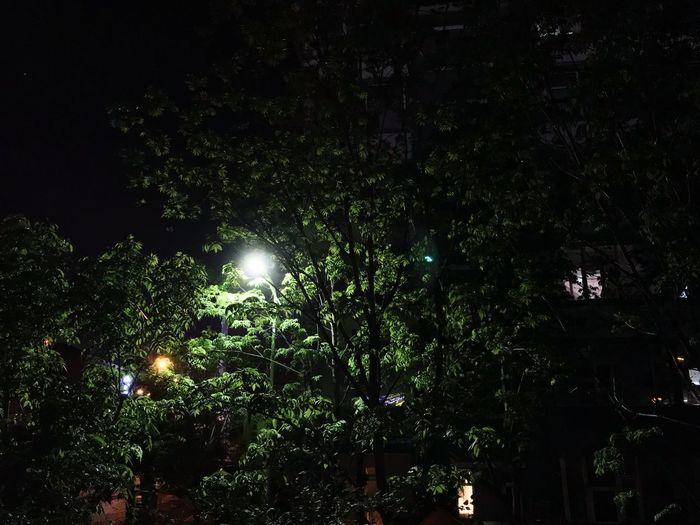 Tree Night Plant Illuminated Growth Nature No People