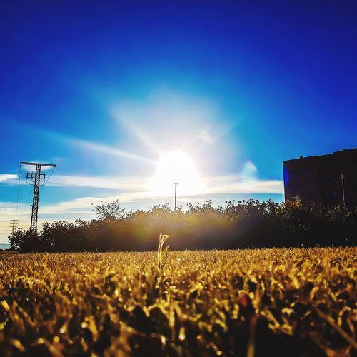 Crowd on field against blue sky