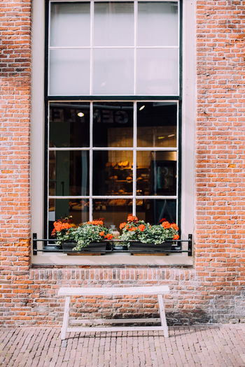 Windows with flowers Architecture Brick Wall Building Building Exterior Built Structure City Day Enkhuizen Flower Growing Growth Holland Ijsselmeer Nature Netherlands No People Outdoors Plant Potted Plant Window Window Sill