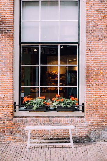 Flower Pots On Window