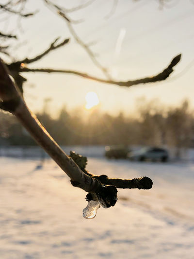 Close-up of frozen tree against sky during sunset