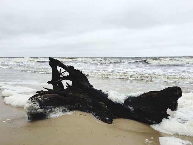 Beach Sea Shore Coastline Nature Uruguay Gray Sky Rain Clouds Sea And Sky Uruguaynatural Sand & Sea Landscapes Tree And Sky Wood