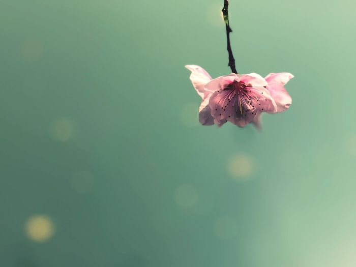 Blooming Nature No People Day Fragility Hanging Outdoors Growth Beauty In Nature Water Flower Close-up
