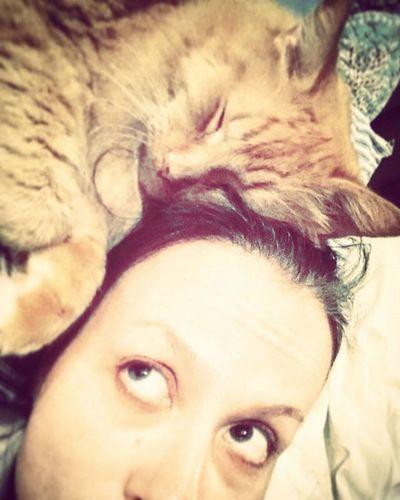 Ummmmmm.... I woke up like this. No, really I did. 😆 Iwokeuplikethis Instacat Purrfect Picoftheday Pawesome Lovemycat Butterthecat Crazycatlady Myginger