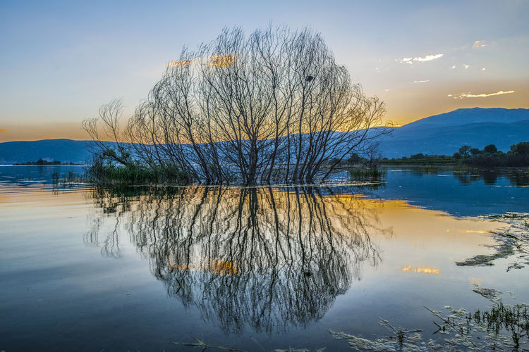 Perfect reflection of a leafless tree in a lake Non-urban Scene Bare Tree Symmetry Cloud - Sky Outdoors Beauty In Nature Tranquility Water Reflection Scenics - Nature Lake Tranquil Scene Sunset Winter Trees Idyllic Alone Blue Branched Picturesque Scenery Mountain Range Nature No People Tree Waterfront Sky