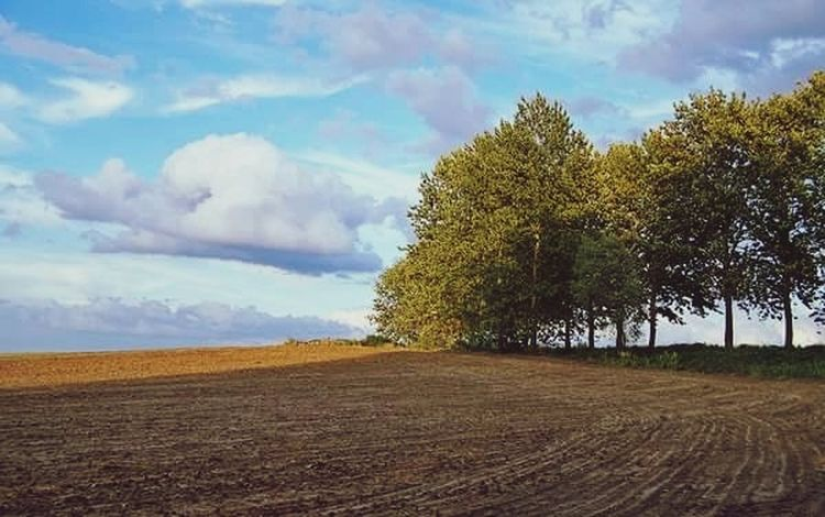 Long way to home Tree Cloud - Sky Sky Rural Scene Landscape No People Outdoors Blue Agriculture Nature Scenics Beauty In Nature Plowed Field Day Light Field Peace Sun Shadows And Backlighting