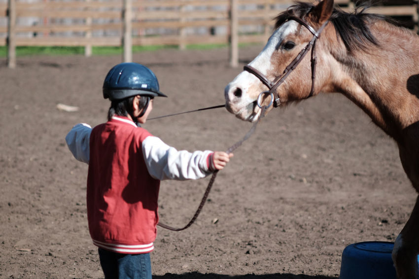 Adult Animal Themes Child Childhood Children Only Day Domestic Animals Headwear Helmet Horse Mammal One Animal One Boy Only One Person Outdoors People Real People