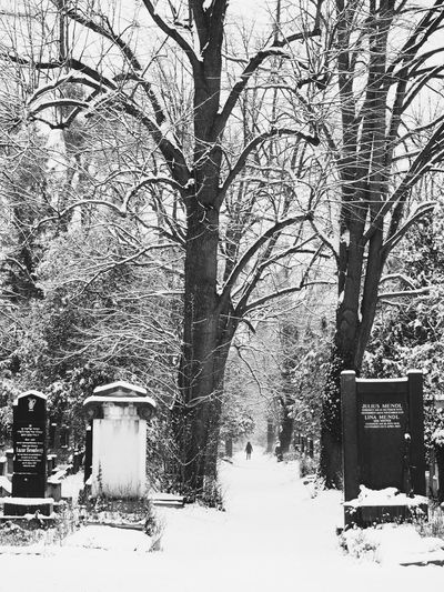 Cemetery Cemetery Photography Blackandwhite Bnw_collection Streetphotography Nature_collection Snowy Trees Vienna vanishing point Wien Snow Cold Temperature Winter Tree Weather Outdoors Nature Bare Tree
