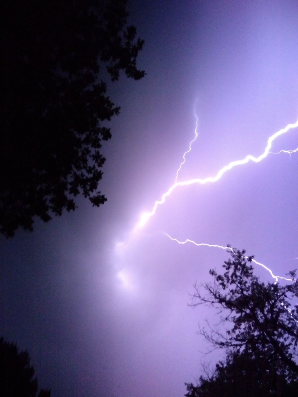 LOW ANGLE VIEW OF LIGHTNING OVER SILHOUETTE TREES