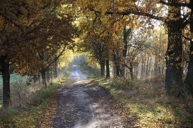 Polski Autumn