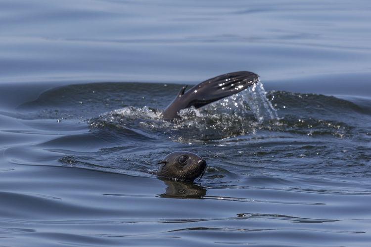 Seal Sealife