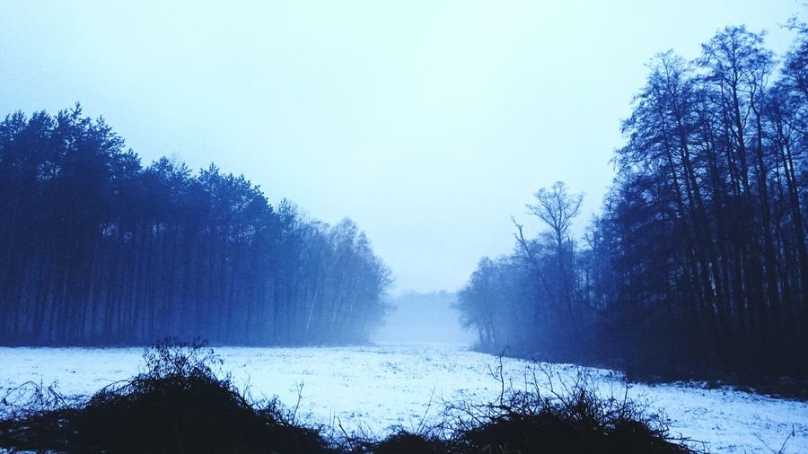 Hanging Out Winter Field FoggyFoggy Morning Fog Fog In The Trees Enjoying Life Hanging Out Taking Photos Z3compact Winter Trees Snowy Winter Forest Beautiful Surroundings View Work Wintersky Winter Forest Landscapes With WhiteWall