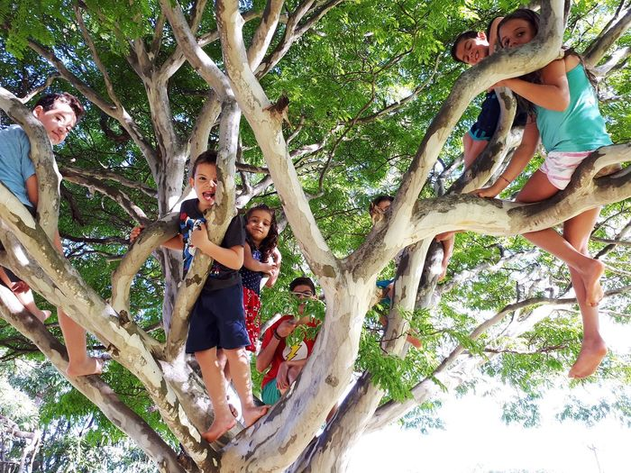 Children Only Tree Low Angle View Tree Trunk Day Branch Togetherness EyeEmNewHere